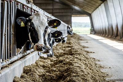 Landbrugsbyggeri